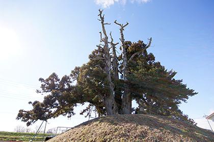 160107足利市鵤木の一本杉③