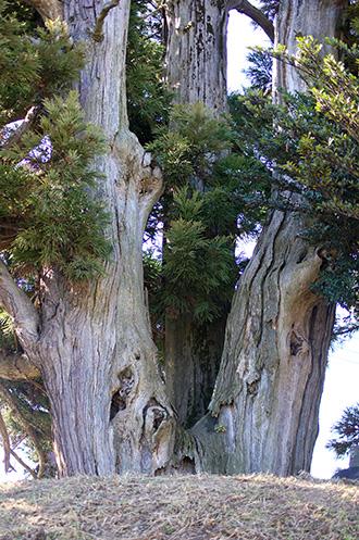 160107足利市鵤木の一本杉⑤