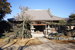 160211香取市安興寺の大杉⑧