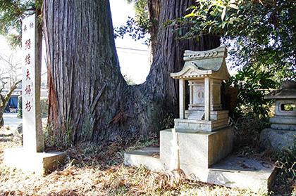 160211香取市大戸神社の杉④