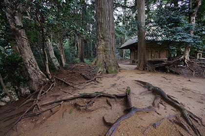 160223星宮神社の杉⑥