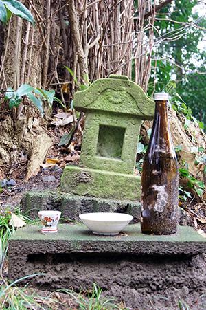 160223星宮神社の杉⑧