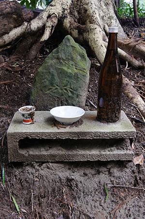 160223星宮神社の杉⑪