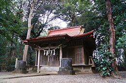 160223稲葉山神社杉⑥