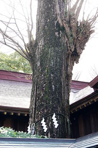 160308鏑木麻賀多神社③