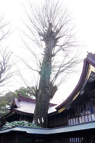 160308鏑木麻賀多神社②