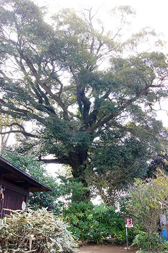 160308佐倉市鏑木麻賀多神社