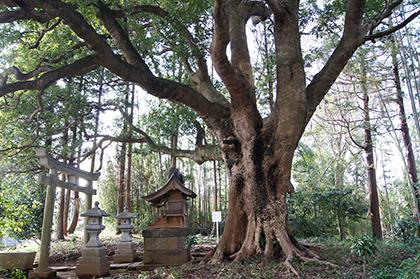 160308寺崎諏訪神社①