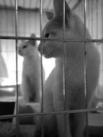 保護仔猫2016.3.4