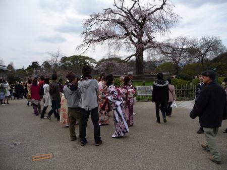 04-090328 円山公園のしだれ桜
