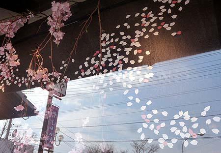 ウィンドウは桜満開