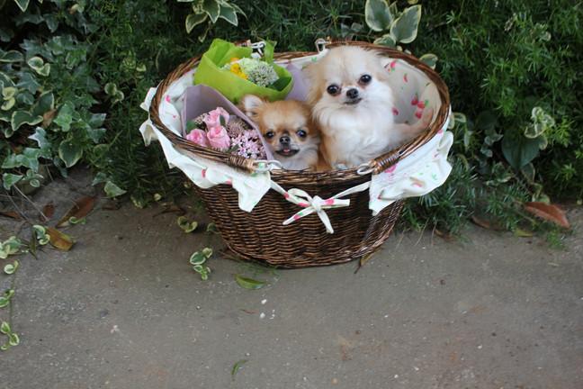 blog_import_52e6af4977d0c_20160316172759533.jpg