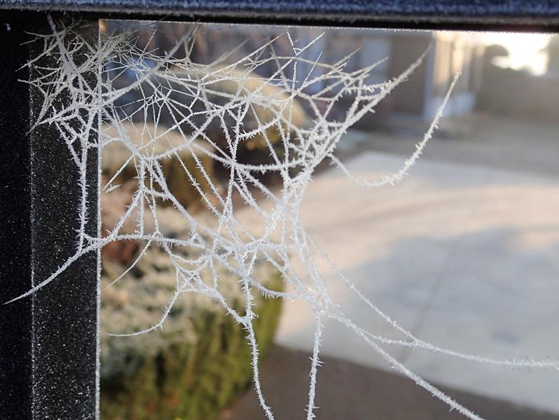 201601 クモの巣 凍結