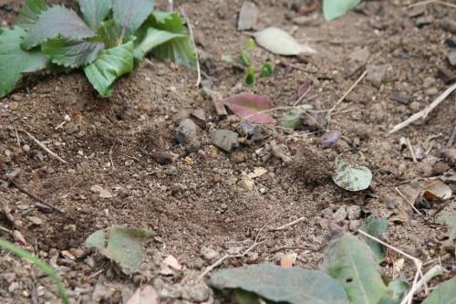 生ごみ発酵堆肥0001_2