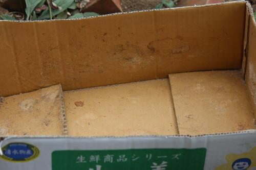 生ごみ発酵堆肥0001_3
