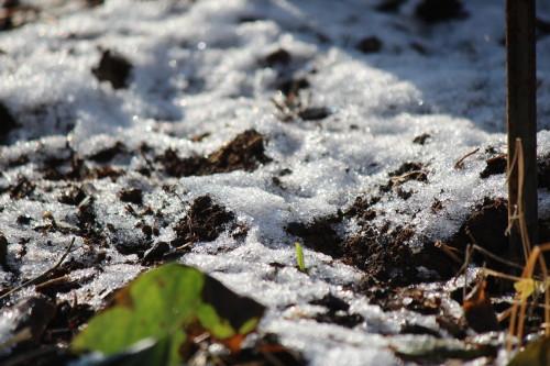 ちょっぴり雪の朝0001_2