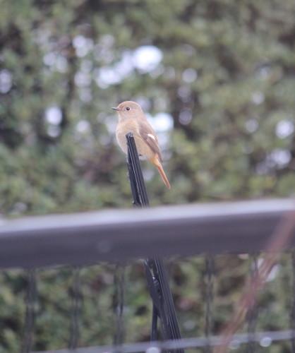 小鳥0001