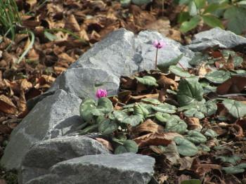 植物公園0001_5