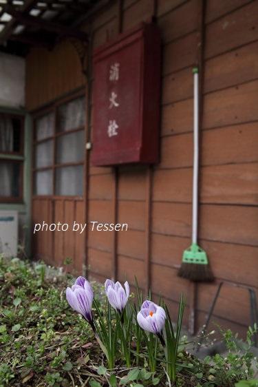 IMG_1001花