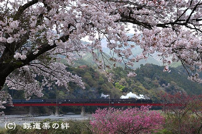20110410笹間渡025D2