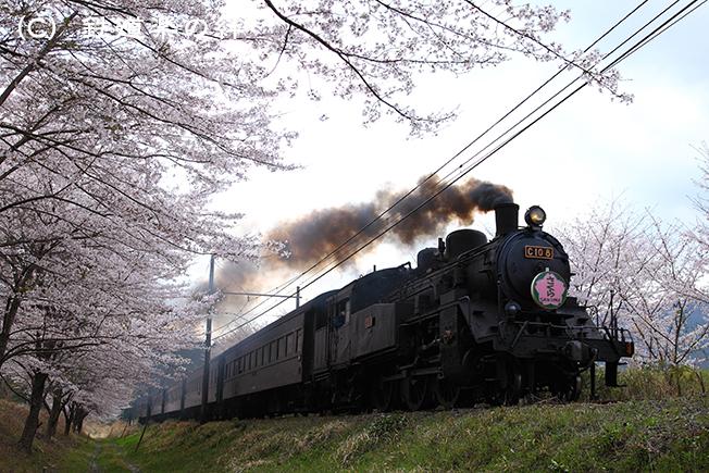 20110410駿河徳山025D2