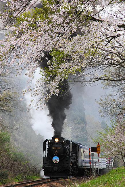 20110429咲花
