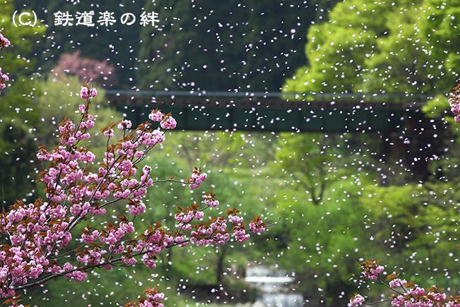 20110508咲花015D2