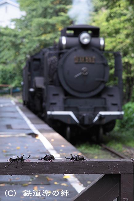 20110806川場035D2
