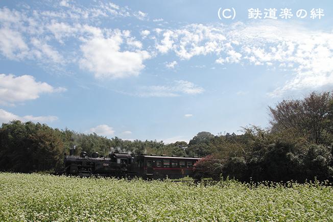 20110919多田羅