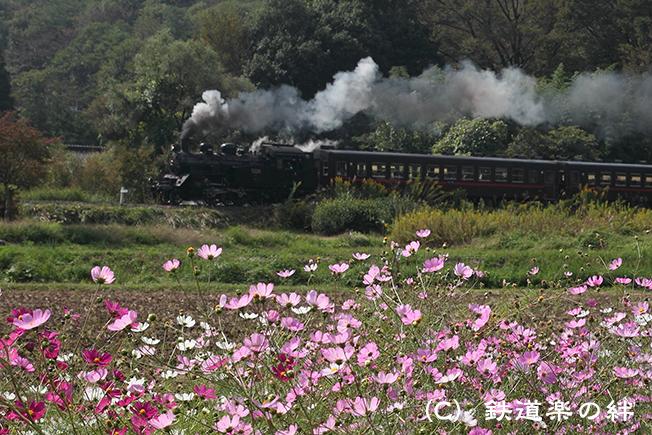 20111010市塙015D2