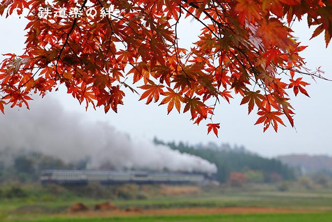 20111106上野尻5D2