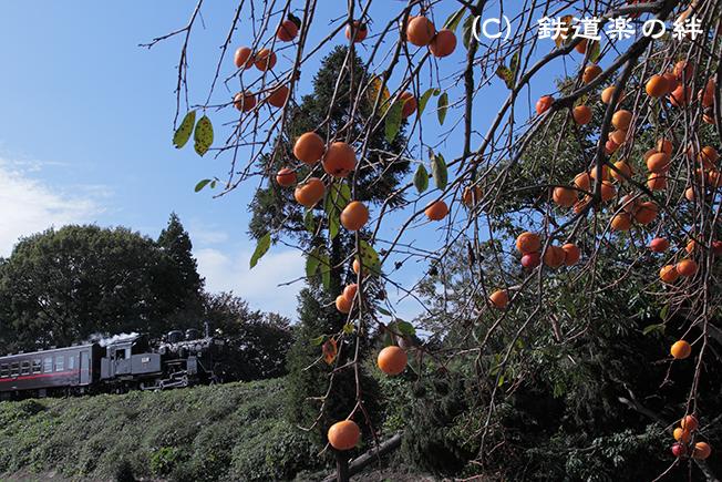 20111109折本5D2