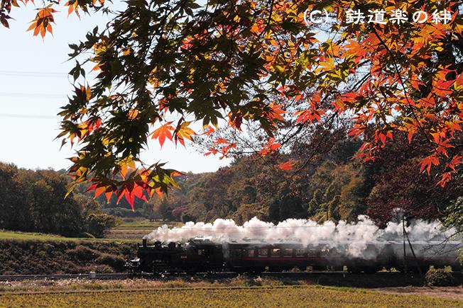 20111116笹原田