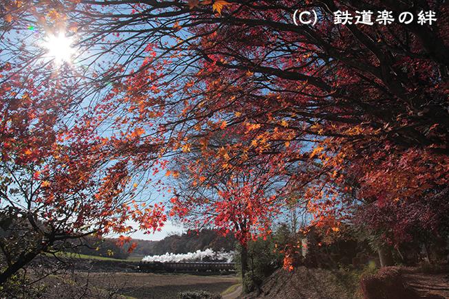 20111126笹原田5D2