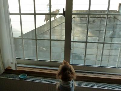 2015年12月窓越しの猫の1