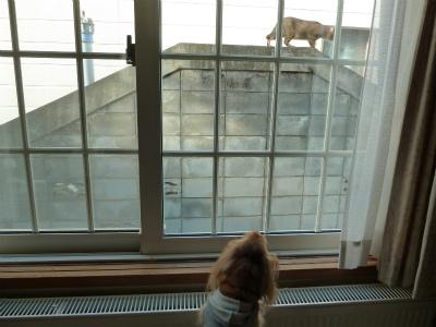2015年12月窓越しの猫の2