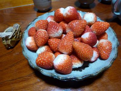 2016年3月千葉イチゴ