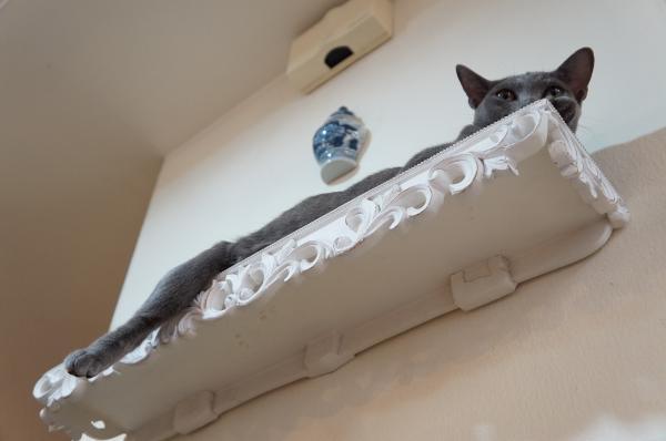 korat cat コラット6