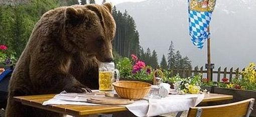 beer_bear.jpg