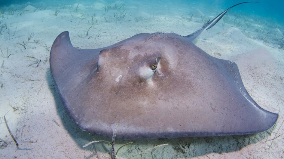 stingray-ocean-floor.jpg