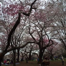 2016h昭和記念公園