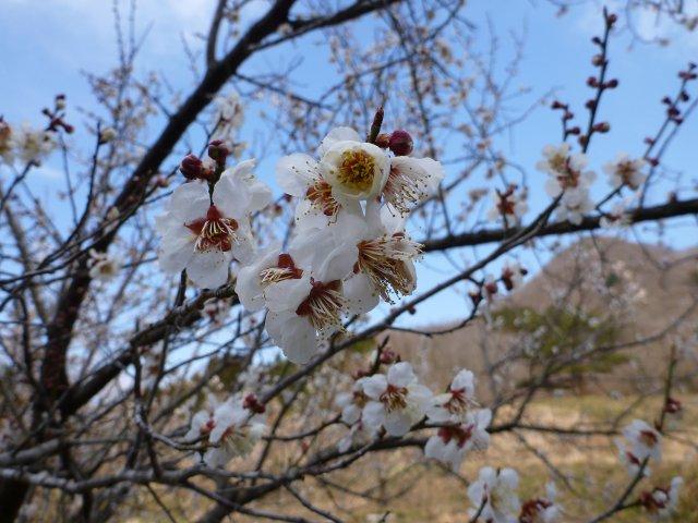 s桜?と七ツ森2