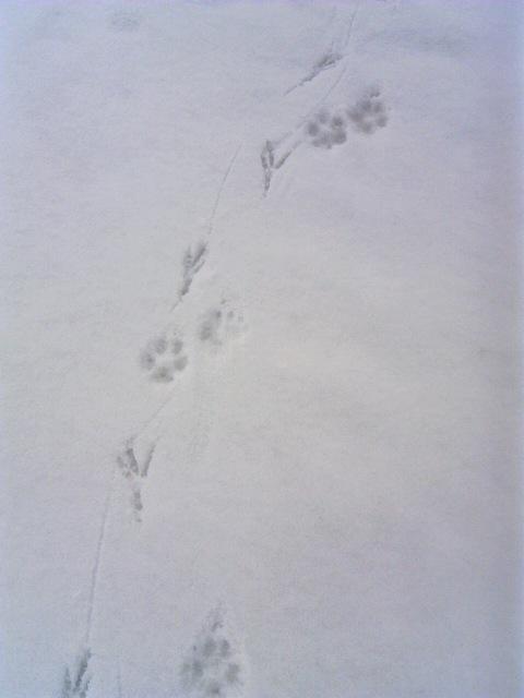 キツネとネズミ 001