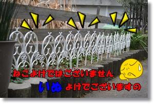 DSC_0228_20160228210758be2.jpg