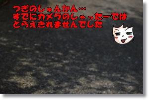 DSC_0238_201602282108014a4.jpg