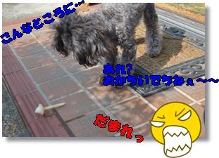 DSC_0243_201602282108334c2.jpg