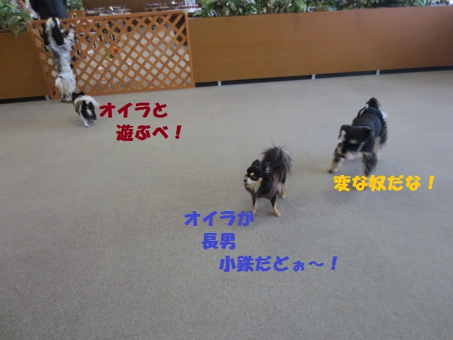 IMG_2486小鉄吠え1