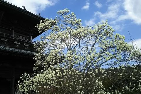 八番札所、熊谷寺