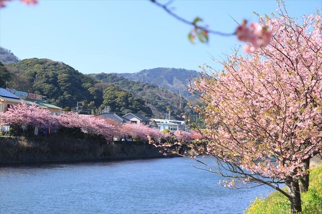 2016_kawazu(68).jpg