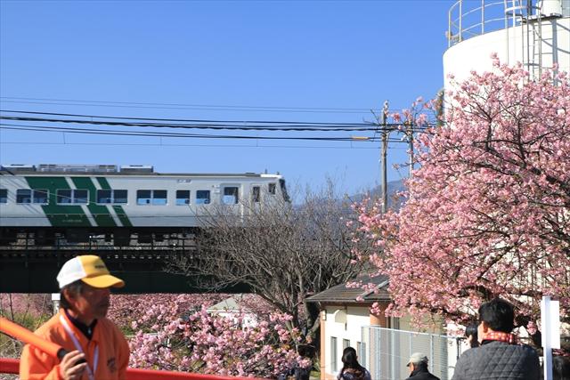 2016_kawazu(73).jpg